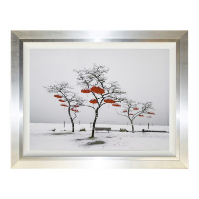 CC500LA Umbrella Tree
