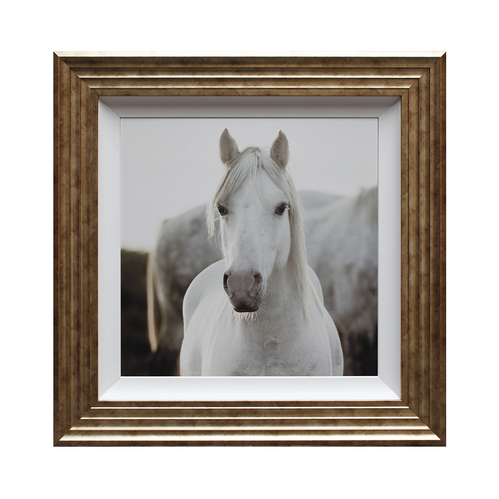 IG5284 Horse
